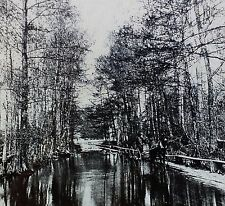 Cypress Swamp, Magic Lantern Glass Slide