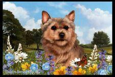 Summer Floor Mat - Norwich Terrier 39152