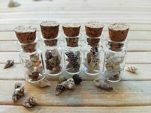 x10 wedding party favours miniature bottles beach shell ocean mermaid bag filler