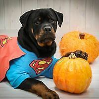 DC Comics Superman dog costume jacket shirt FOR SMALL TO XXXLARGE DOGS - New