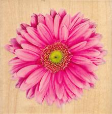 Inkadinkado ~ PINK GERBERA ~ Wood Mounted Rubber Stamp Flower Bloom Spring