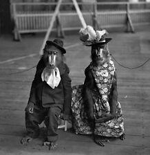 8x10 Print Historic Jacko and Bess Olympia Circus de London 1931 #JB1