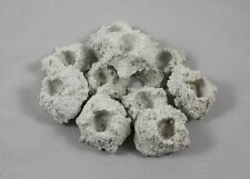 10 kleine Ablegersteine schwere Ausführung für Korallen Meerwasser 0,40€/St.