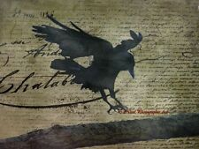 Rustic Gothic Raven Black Bird Crow Green Flight Writing Matted Picture USA A674