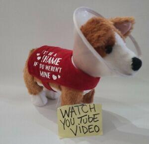 Shuffling Cone of Shame Corgi Animated Plush Gemmy Dog  BAD CASE OF LOVING YOU