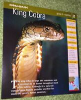 Endangered Species Animal Card - Birds - King Cobra #2