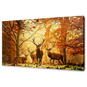 RED STAG DEERS AUTUMN FOREST CANVAS PRINT PICTURE WALL ART VARIETY OF SIZES