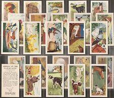 EWBANKS-FULL SET- ANIMALS OF THE FARMYARD (25 CARDS) - EXC