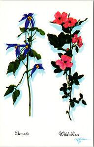 Clematis Wild Rose Flower Teton Harrison Crandall Art Vintage Postcard