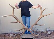Giant 360 Class 6 X 7 Elk Shed Set antler hunting skull horns