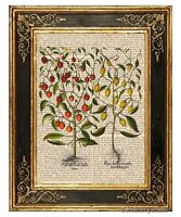Hot Chili Pepper Plant #1 Art Print on Vintage Book Page Home Kitchen Decor Gift