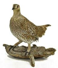 Taxidermy, Grouse, Sharp Tail on Log Mount, Handsome Piece!
