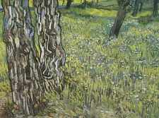 Pines And Tooth Lion In The Garden Of Saint Pauls Hospital Saint Remy 1890 A3 Bo