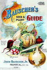 1898 Bausher's Celery Vegetables Seed Packet Catalogue Travel Poster
