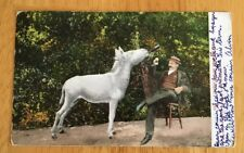 "Edward H. Mitchell Postcard #933 ""Have One On Me Donkey"" Posted 1909 California"