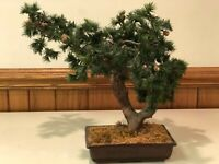 Vintage 1980's Artificial Bonsai Style Pine Tree Plant on the Brown Ceramic Pot