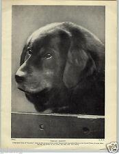 1930 Book Plate Dog Print Tibetan Mastiff Gyandru Crystal Palace Mrs Eric Bailey