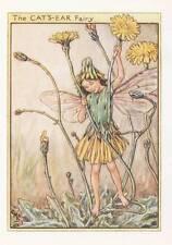 Flower Fairies: The Cat's Ear Fairy Vintage Print c1930 by Cicely Mary Barker