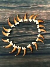 20 Real Blonde Coyote Claws Toes Craft Skull Jewelry Gothic Voodoo Animal Mount