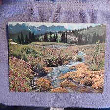 Vintage Postcard Oversize J-54-6 Mt Rainier National Park - Wildflowers