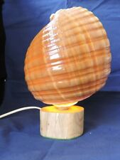 Tonna Cepia Shell Lamp on driftwood base, new