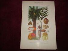 Floral Modern (1900-79) Date of Creation Art Prints