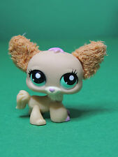 #2514 chien dog Chihuahua papillon with Fluffy Ears LPS Littlest Pet Shop Figure