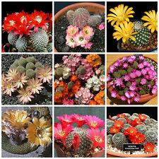 20 semi in miscuglio di Rebutia mix ,piante grasse,seed cactus mix