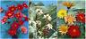 3 Colorful Vintage Flowers - 3D Lenticular Postcard Greeting Card