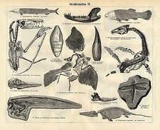 Juraformationen ARCHEOPTERYX libellule de Solnhofen crâne du ichthysaurus