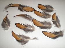 lot de 10 plumes 3 a 5 cm