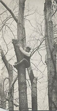 ANTIQUE PHOTO OF A MUSTACHES MAN CLIMBING A LARGE TREE.