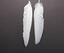 Duck Quill Feathers - White