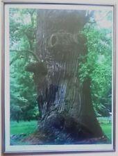 In 30x40cm Bilderrahmen/Rahmenlose Deko-Bilderrahmen mit Natur-Motiv