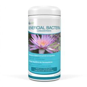Aquascape 98949 Beneficial Bacteria 1.1lb, Pond Algae Control -water garden-koi