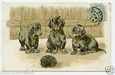 chiens teckels.dachshunds dogs.hérisson.hedgehog.dorure.gilding.