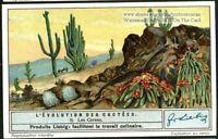 Cereus Cactus Flower Blossom Plant Desert 1930s Trade Ad  Card