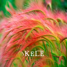 Foxtail Barley Ornamental Grass Plants Hordeum Jubatum Rare Garden 100 Pcs Seeds
