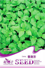Original Packaging 50 Seeds Catnip Seeds Cavacrol Herb Plant Seeds Hot D041