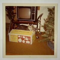 COLOR, A Cat In The Box By The Old TV, Colorite Pans, Vintage Photo Snapshot