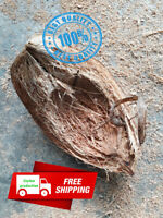 Natural Orchid Tropical Plant Hanger Making Natural Coconut Shell Husk Encyclia