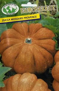 10 Semi/Seeds ZUCCA MOSQUEE PROVENCE