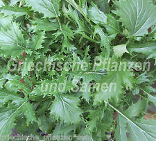 MIZUNA * ASIA-Salat würzige Salat-Spezialität* 50 Samen