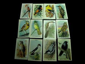 24 USEFUL BIRDS OF AMERICA ARM & HAMMER BAKING SODA TRADE CARDS