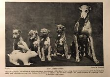 1934-35 Greyhound and Pups- Matted Print