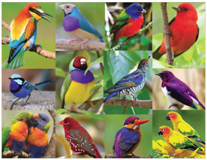 Birds of Paradise 500 piece jigsaw puzzle 596mm x 457mm (sk)