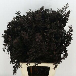 UK 4-5 stems Dried Black ruscus home decor/ vase arrangements / cake topper