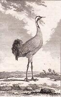 Gravure XVIIIe La Grue Gruidae Crane Kraniche Журавлиные 1770 鹤科