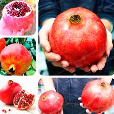 20 PCS Seeds Giant Pomegranate Bonsai Fruit Tree Super Sweet Home Garden 2020 D