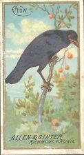 Birds Collectable Overseas Issuers Cigarette Cards